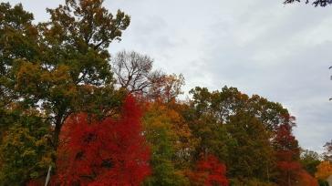 fall-5