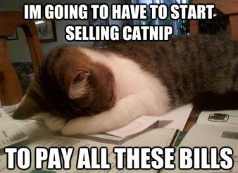 cat-nip