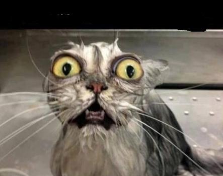 scared cat 2