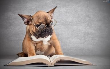dog reading.jpg