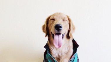 dog happy.jpg