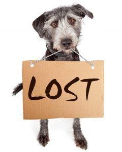 lost dog 2.jpg