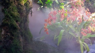 cloud forest mist
