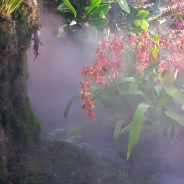 cloud forest mist