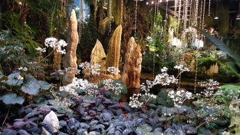 cloud forest stalagtites