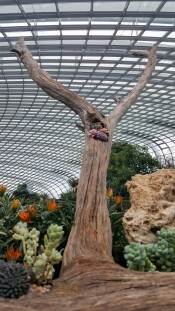 flower dome tree