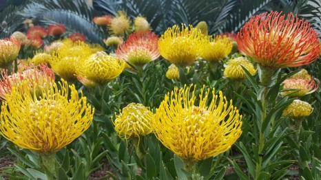 yellow flowers, flower dome